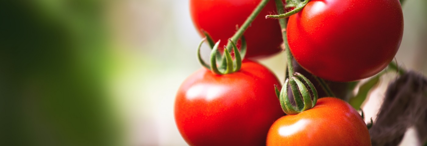 Anti-Cancer Molecule in Tomatoes Tracked by Researchers