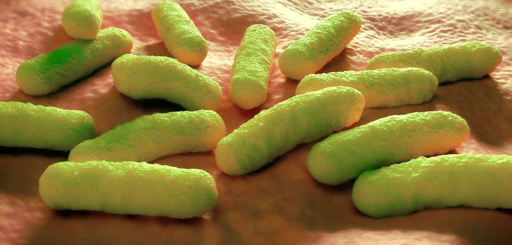 Salmonella May Be Vehicle for Making Prostate Cancer Therapies More Effective